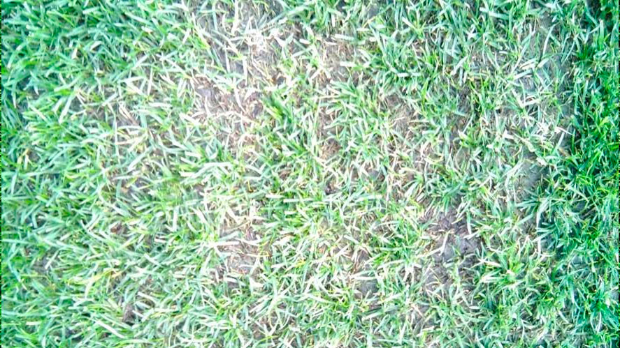 Andled Progrow - After